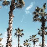 Barcelona palmtress