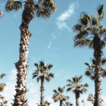 Barcelona palmtrees